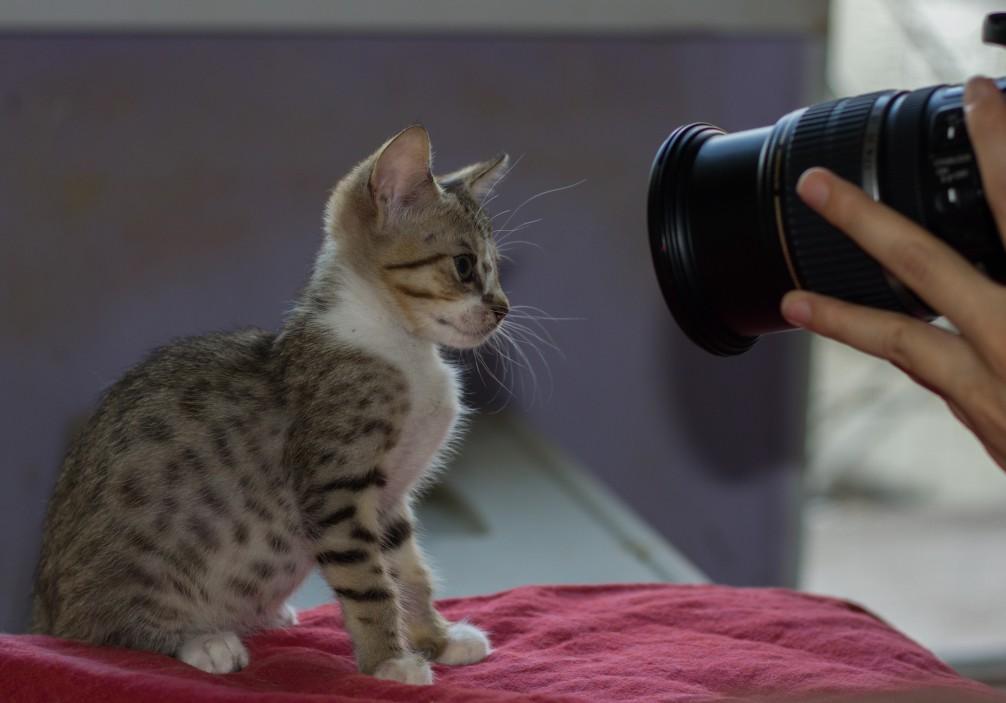 photographe pour animaux